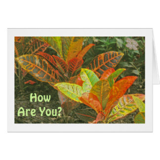 HOW ARE YOU? /CROTONS/ORANGE, LIME-GREEN, YELLOW CARD