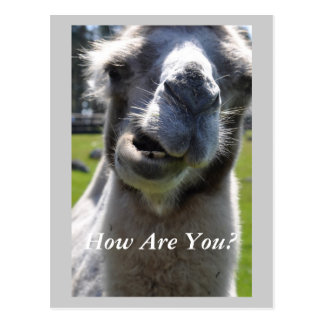 How Are You? Postcard