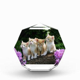 How Do I Get Down Kittens Award