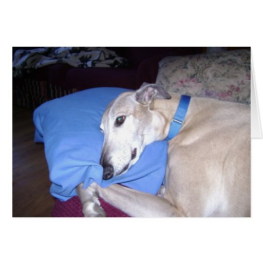 How Every Greyhound should Live Greeting Card
