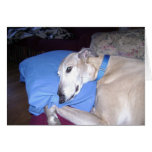How Every Greyhound should Live Greeting Cards