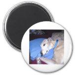 How Every Greyhound should Live Refrigerator Magnet