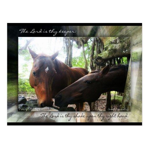How Many Horses? Postcards
