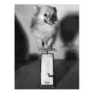 How Much Do I Weigh? Postcard