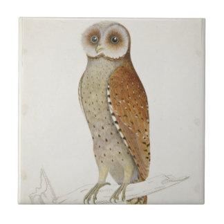 How now Bay Owl? Tile