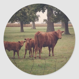 How Now Brown Cow Classic Round Sticker