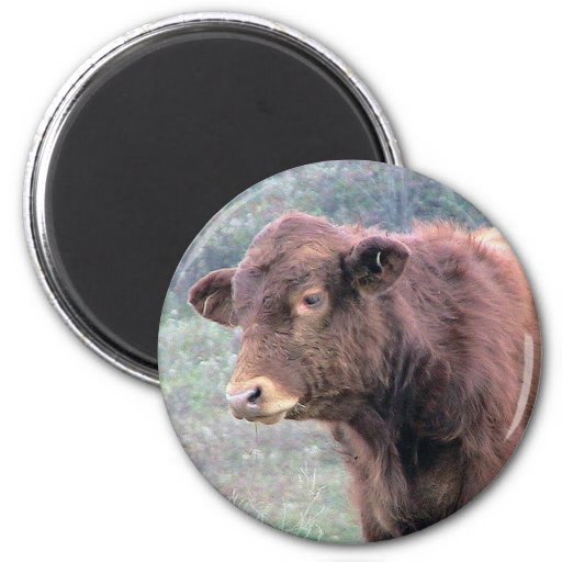 How now brown cow? fridge magnet
