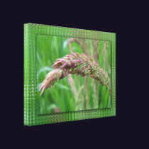 How the Grass Grows Canvas Print