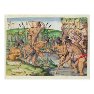 How the Indians Collect Gold from the Streams Postcard