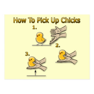 How To Pick Up Chicks Funny Directions Postcard