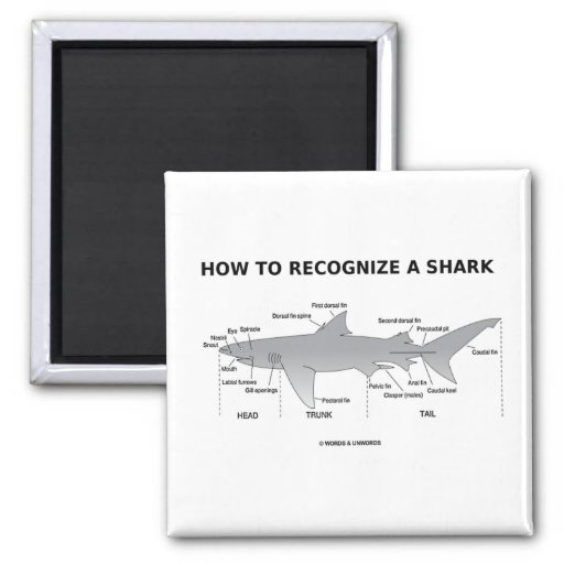 How To Recognize A Shark (Biology Humor) 2 Inch Square Magnet