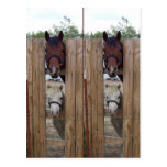 Howdy-Howdy Horse Bookmarkers Postcard