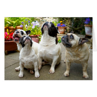 Howgillhounds cards Four French Bulldogs