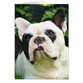 Howgillhounds cards French Bulldog Susan