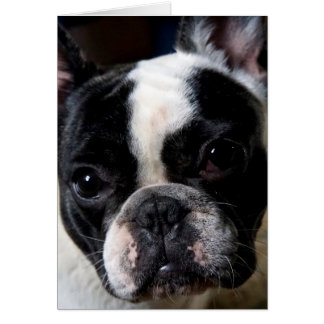 Howgillhounds French Bulldog Nelson Card