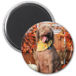 Howie - Labradoodle Photo-1 Magnets