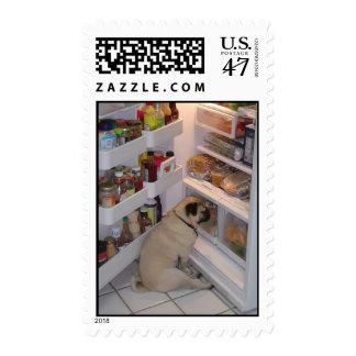 Howie Pee Pugpants Raids the Fridge Postage Stamps