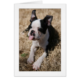 Howie Sticks His Tongue Out Greeting Card