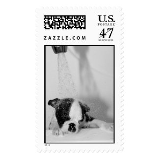 Howie takes a Bath Postage Stamp