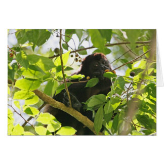 Howler Monkey Eating in the Jungle Card