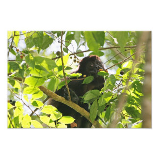 Howler Monkey Eating in the Jungle Photo Art