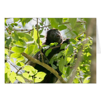Howler Monkey in the Jungle Photo Card