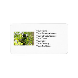 Howler Monkey in the Jungle Photo Label