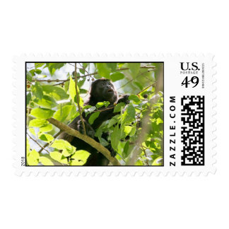 Howler Monkey in the Jungle Photo Stamp