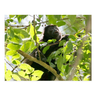 Howler Monkey in the Jungle Photo Postcard