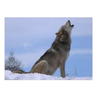 Howling Alaskan Timber Wolf Custom Announcements