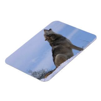 Howling Alaskan Timber Wolf Rectangular Photo Magnet
