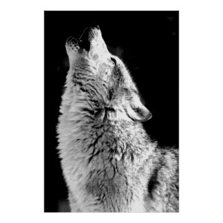 Howling Grey Wolf at Night Poster Print