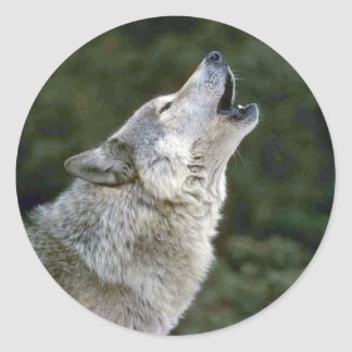 Howling grey wolf beautiful photo portrait, gift classic round sticker