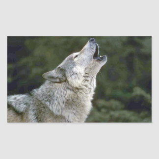 Howling grey wolf beautiful photo portrait, gift rectangular sticker