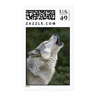 Howling grey wolf beautiful photo portrait postage stamp