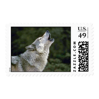 Howling grey wolf beautiful photo portrait postage stamps