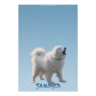 Howling Samoyed Dog in Falling Snow Pet Poster