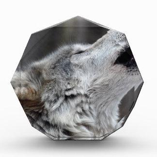 Howling Tundra Wolf Acrylic Award