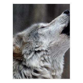 Howling Tundra Wolf Postcard