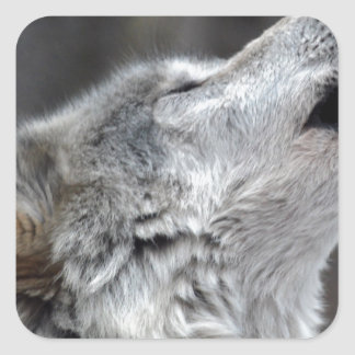 Howling Tundra Wolf Square Sticker