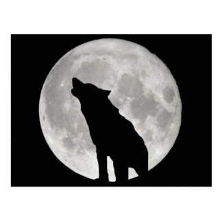 Howling Wolf and Moon Postcard