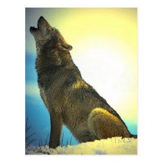 Howling Wolf at Sunset Postcard