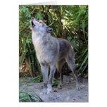 Howling Wolf Birthday Card