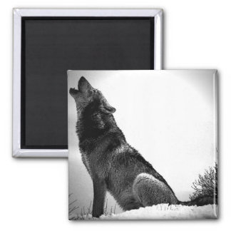 Howling Wolf in Snow Magnet