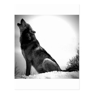 Howling Wolf in Snow Postcard