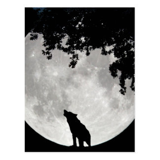 Howling Wolf Moon and Branches Post Cards