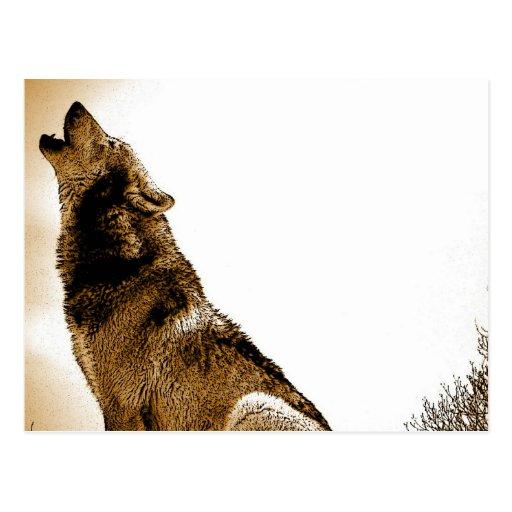 Howling Wolf Postcard