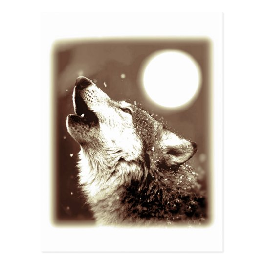 Howling Wolf Postcard