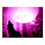 Howling Wolf Postcards