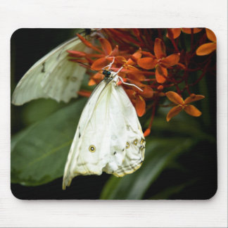 how's it hangin'? mouse pad